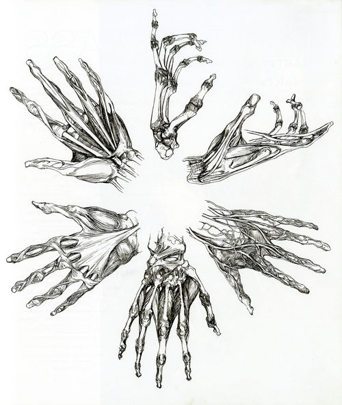 Drawn sleleton bone art Anatomy Miranda Adrienne Body Pin