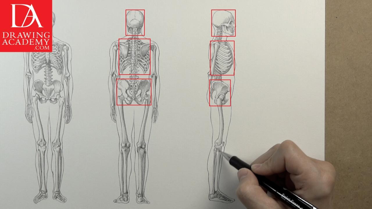 Drawn sleleton bone art The Video Bones Academy Bones