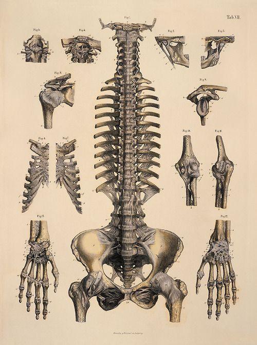 Drawn sleleton bone structure 25+ on Find this de
