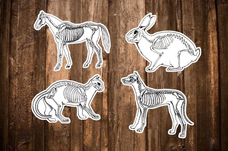 Drawn sleleton cat Etsy Stickers of Anatomy Sticker