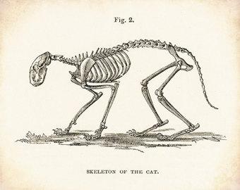 Drawn sleleton cat Skeleton Art Cat Cat Art