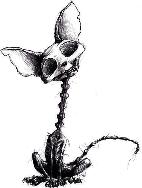 Drawn sleleton cat Pinterest 111 Cat sketch on