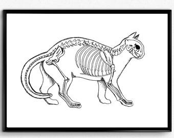 Drawn sleleton cat Etsy Skeleton Cat Black Wall