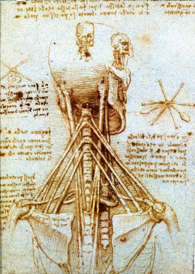 Drawn sleleton da vinci A Anatomical Vinci's Studies Da