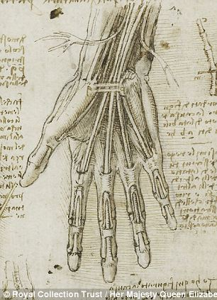 Drawn sleleton da vinci 100s bones Vinci's c his