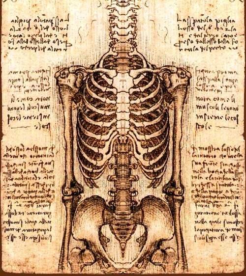 Drawn sleleton da vinci More! Sketchbook Artist Pinterest Anatomy