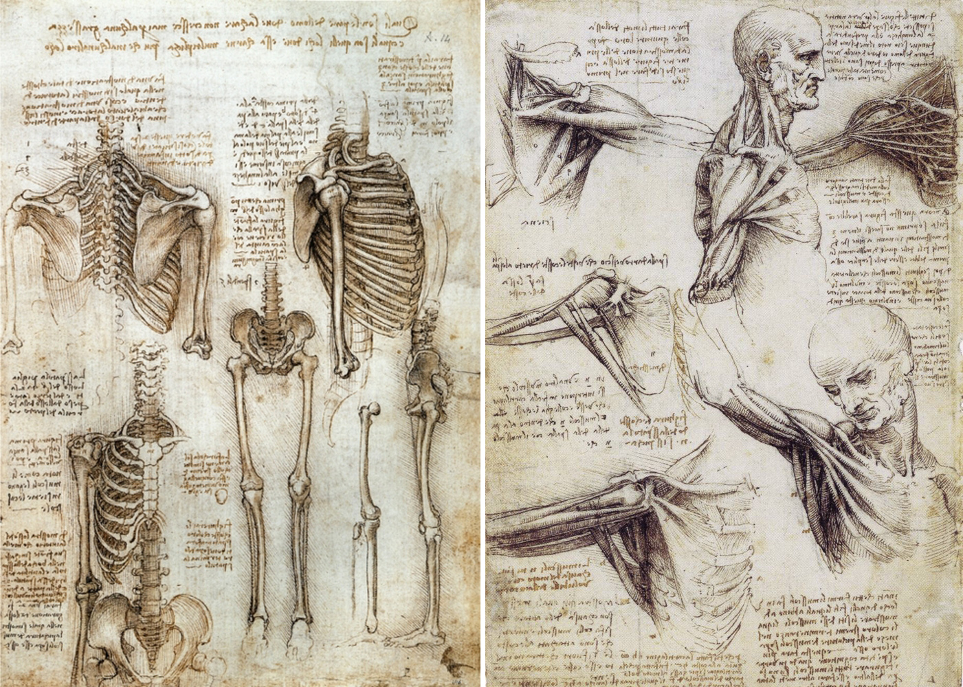 Drawn sleleton da vinci Human drawing skeleton da Human