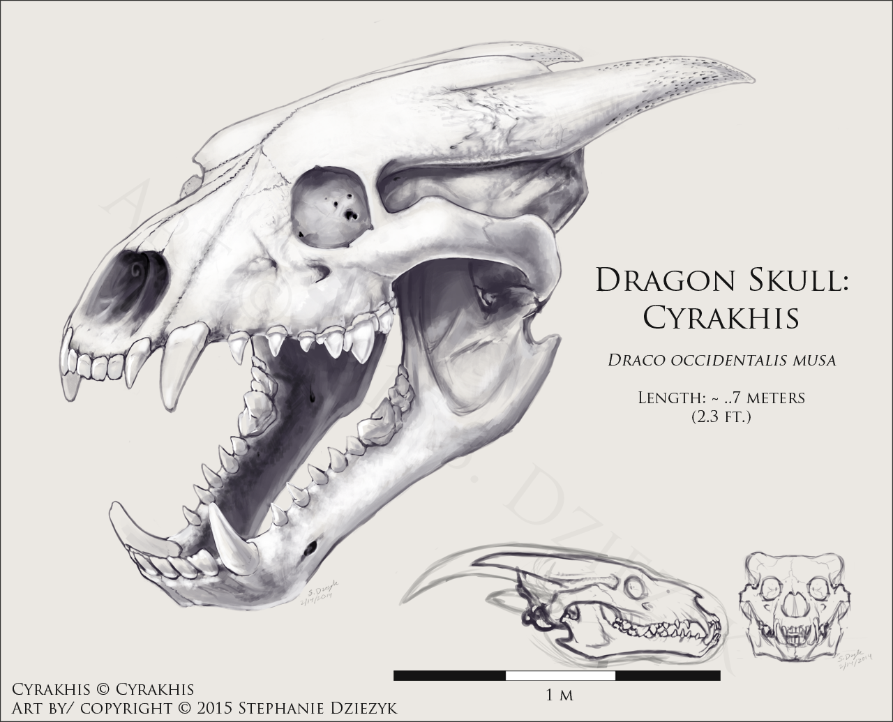 Drawn sleleton dragon Skull Skull on DeviantArt LeccathuFurvicael