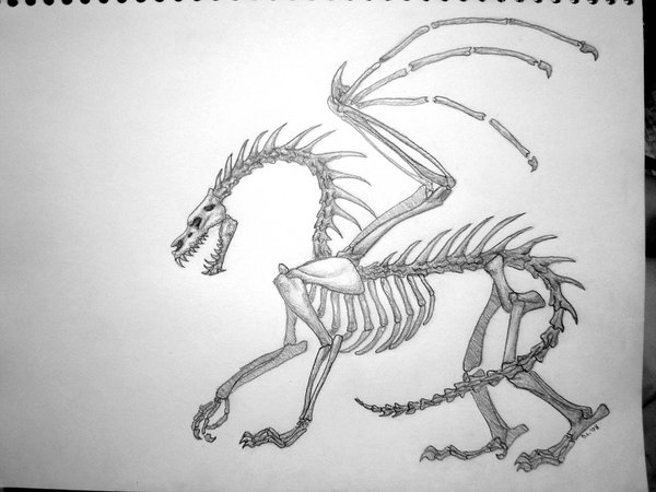 Drawn sleleton dragon Dragon by Skeleton TheOddGod on