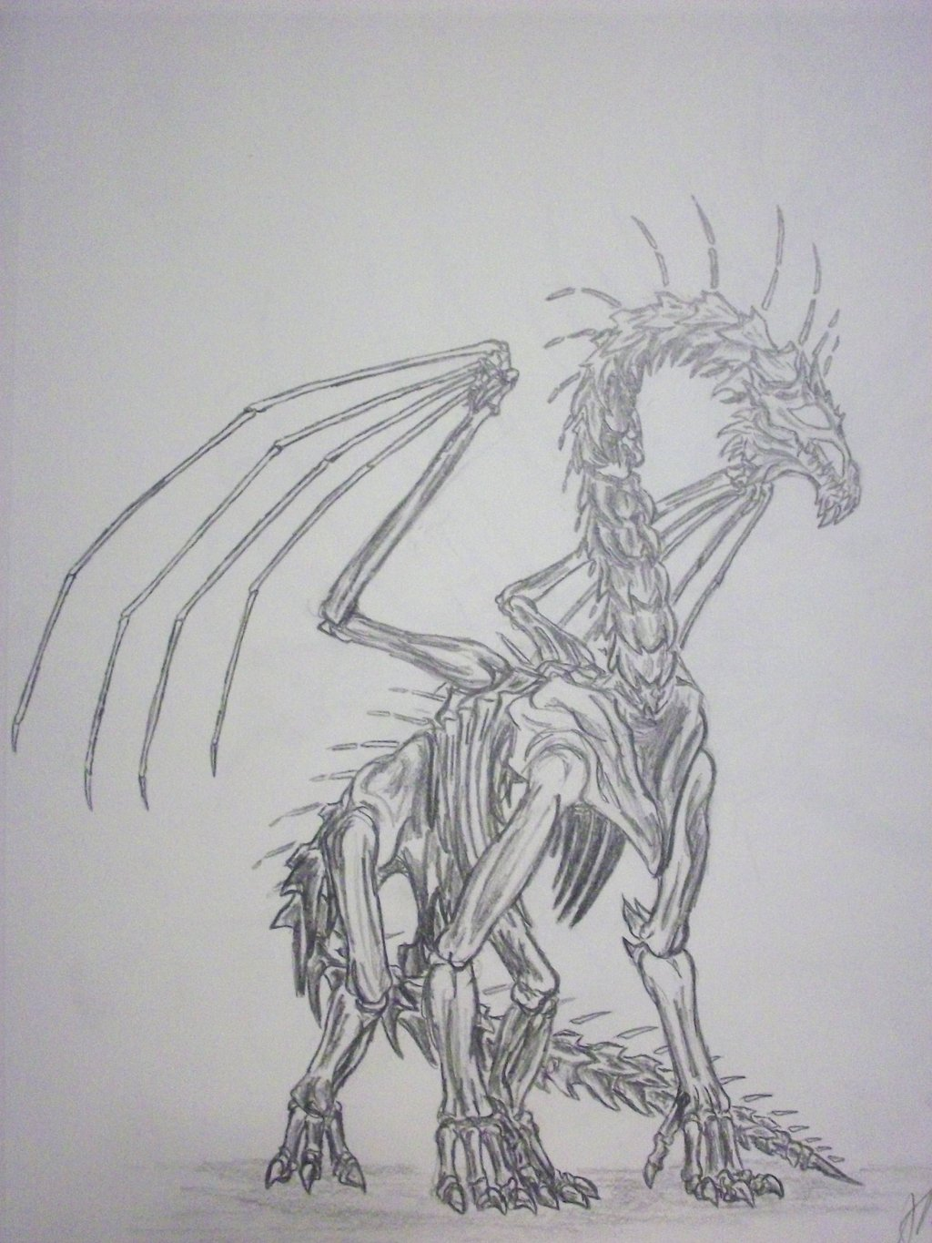 Drawn sleleton dragon Dragon Dragon on DeviantArt RegalDragon