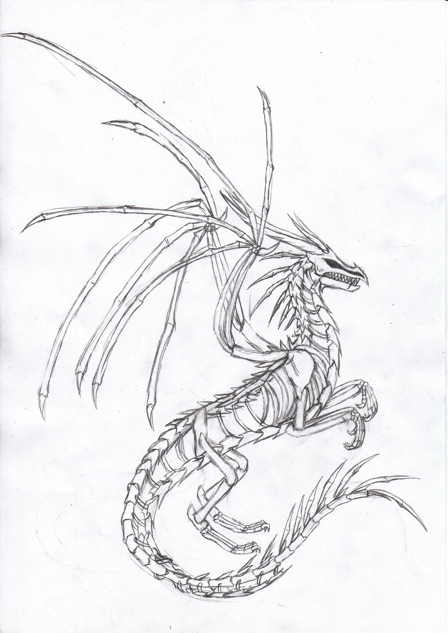 Drawn sleleton dragon Dragon Head(pen) Floating by B