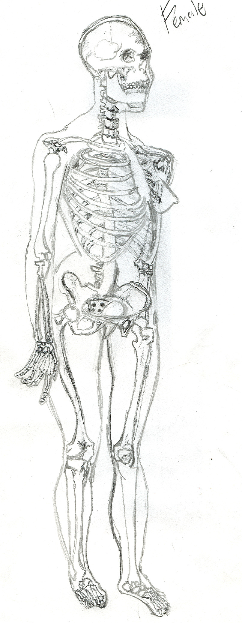Drawn skeleton female skeleton Skeleton 20MinutesIn female on skeleton