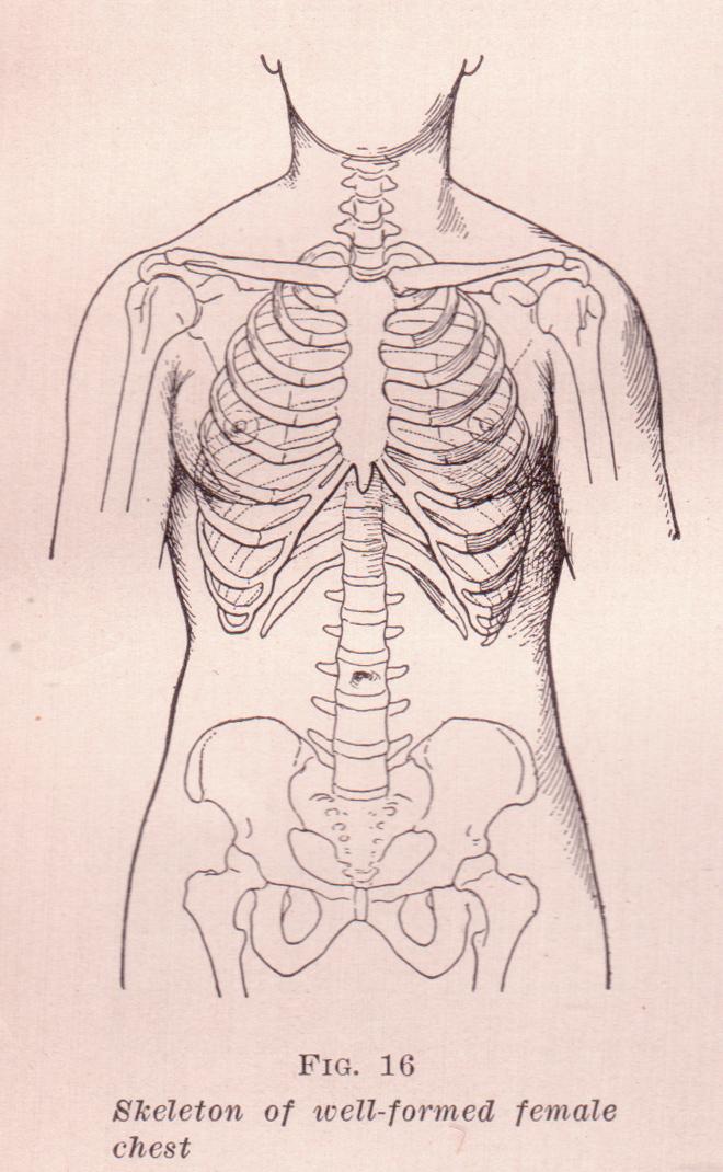Drawn skeleton female skeleton Skeleton Skeleton File:Female File:Female Commons