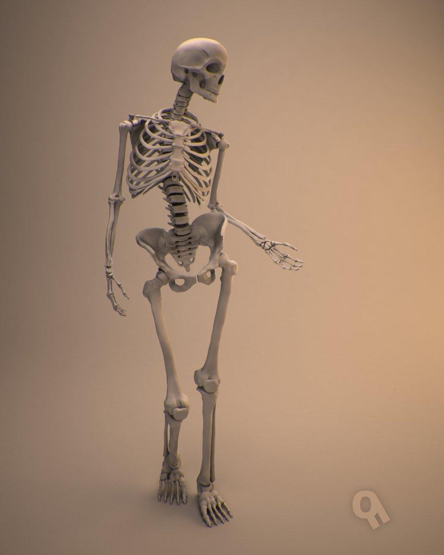 Drawn skeleton female skeleton Skeleton Qwertzus female on skeleton