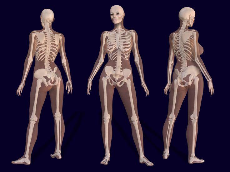 Drawn skeleton realistic Pinterest Skeleton skeleton Female ideas