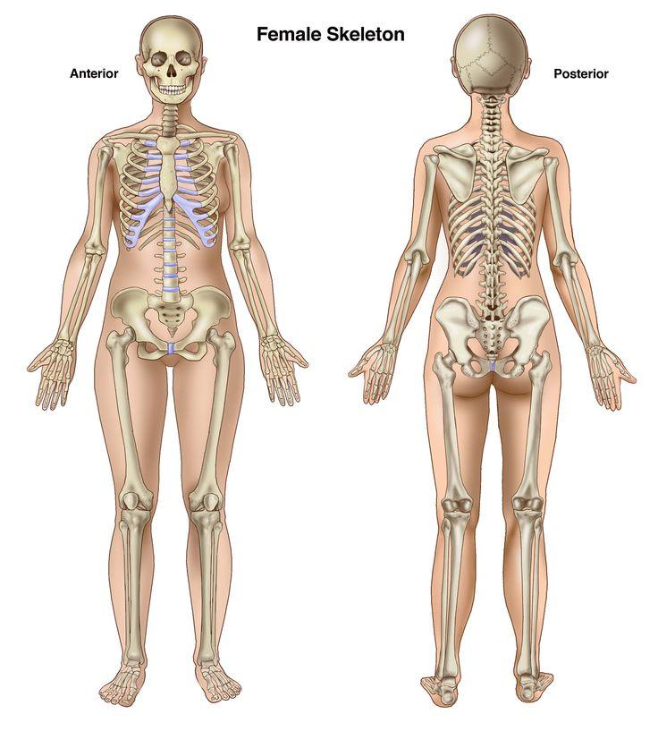 Drawn skeleton female skeleton About on Google Pinterest view