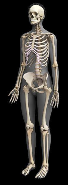 Drawn skeleton female skeleton Pinterest best skeleton more images