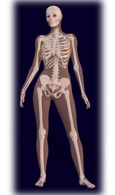 Drawn skeleton female skeleton Pinterest best human 14 Female