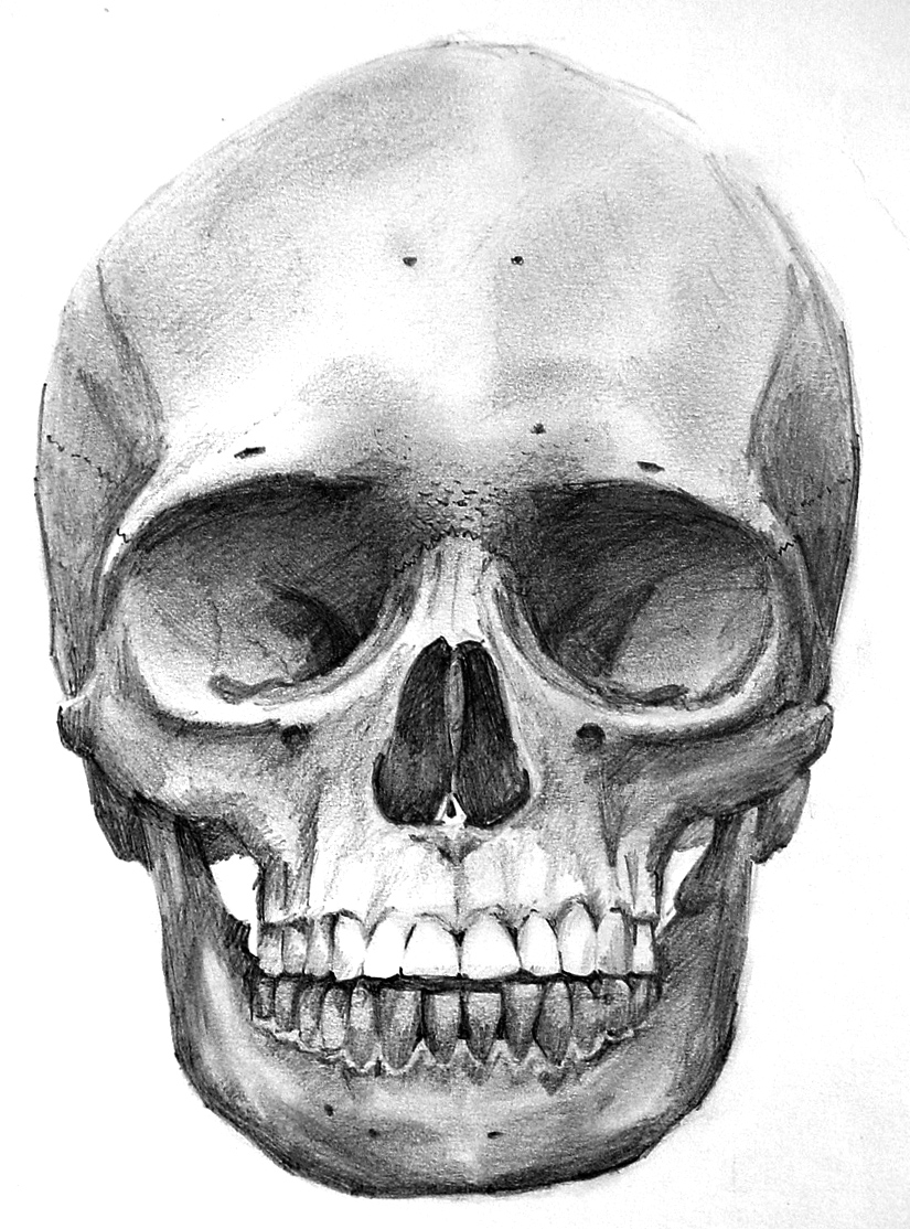 Drawn ssckull skeleton head On this skull and Female