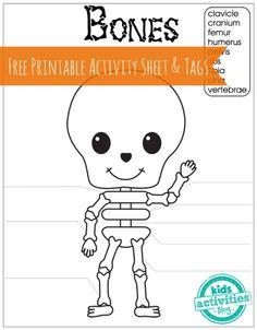 Drawn sleleton fun Fun ideas Image: rabbit labelled