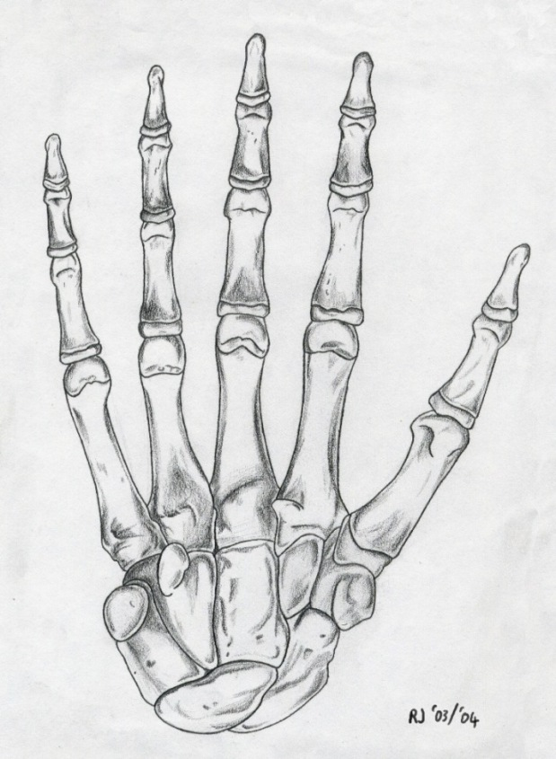 Drawn sleleton hand drawn  drawing Pinterest drawing hand