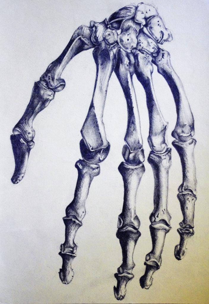 Drawn skeleton hand drawn Hand  Skeleton Hand Drawing
