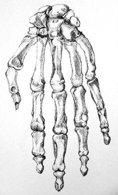 Drawn sleleton hand drawn Gerbig of hand learning bones