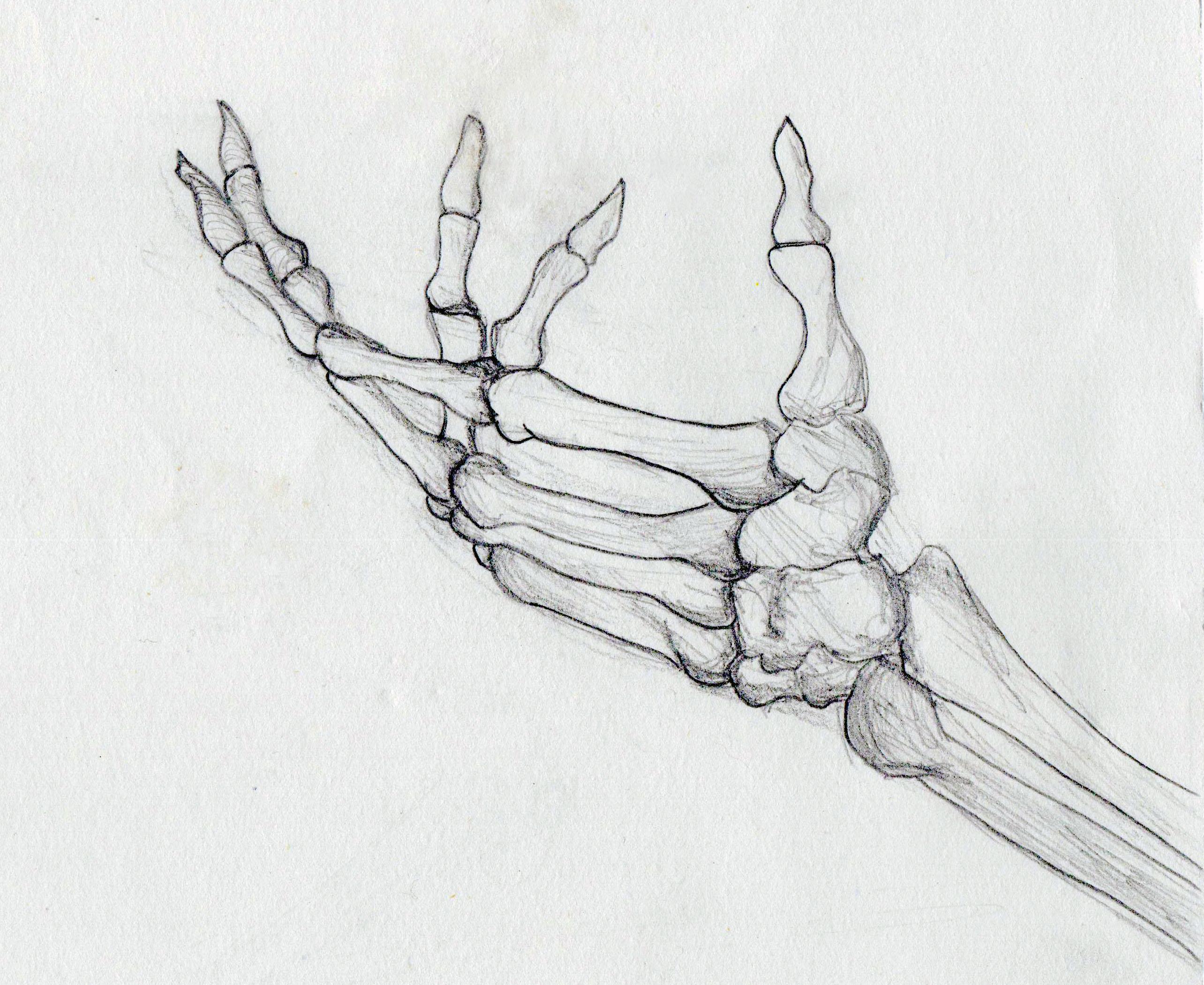 Drawn sleleton hand drawn Search Search hand Skulls side