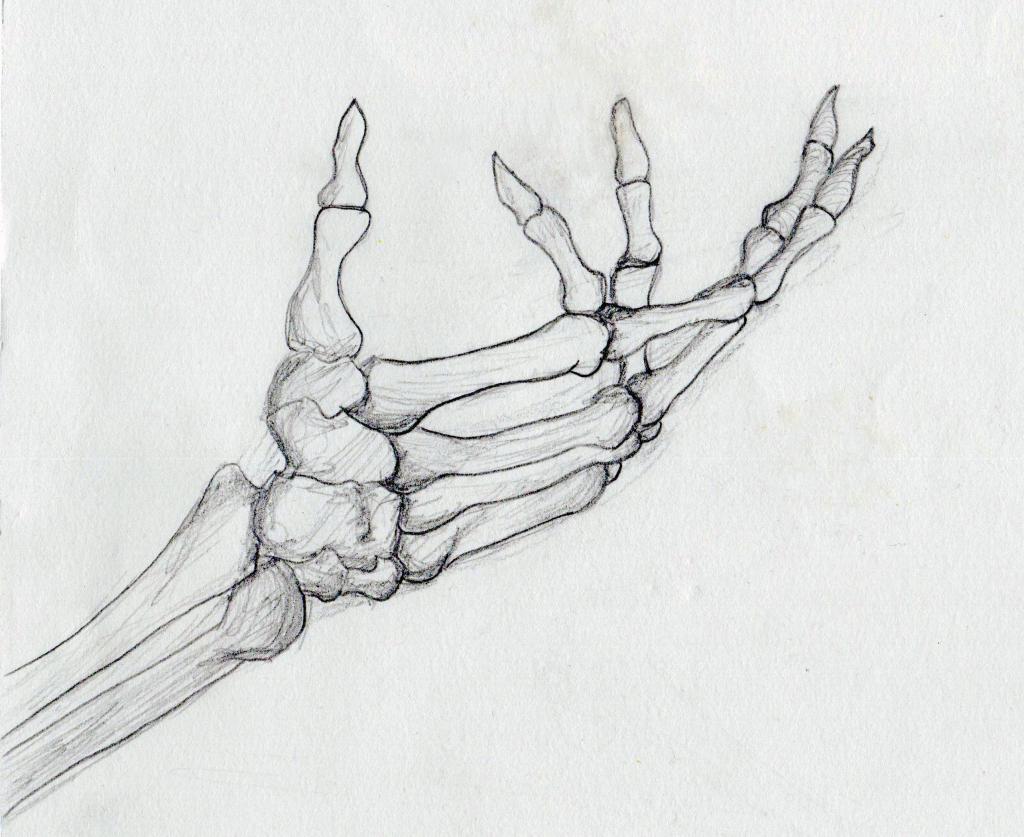 Drawn skeleton hand drawn Hand Art Drawing  Library