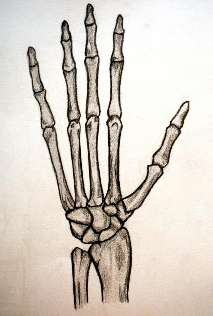 Drawn sleleton hand drawn Drawing Hand Clipart Drawing Hand