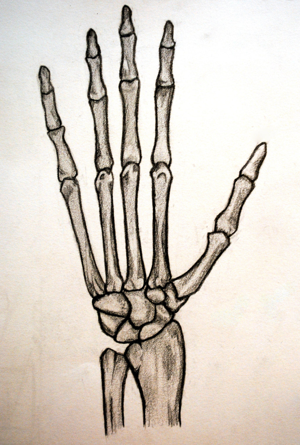 Drawn sleleton hand tumblr Skeleton Hand shinigamixandie by by