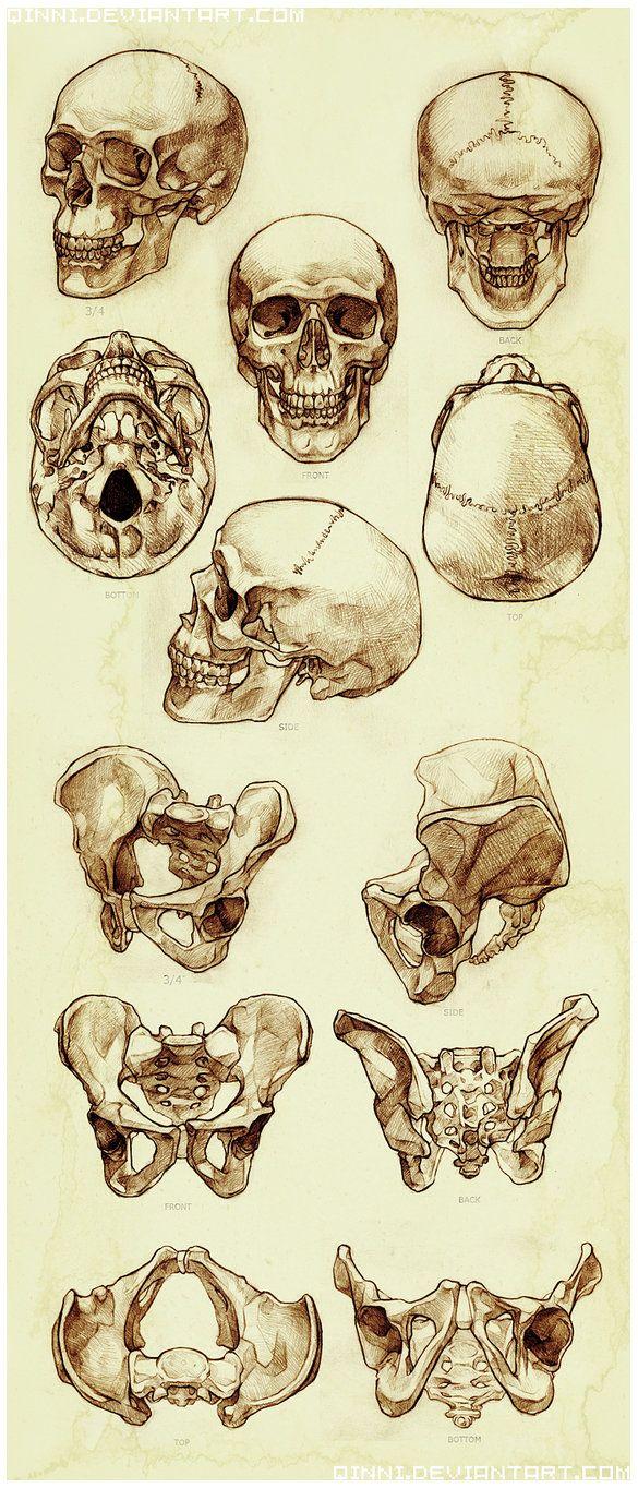 Drawn sleleton head bone · crâne anatomy de Best