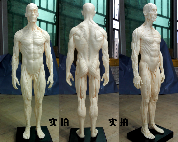 Drawn sleleton head bone Muscle human Cheap PU com
