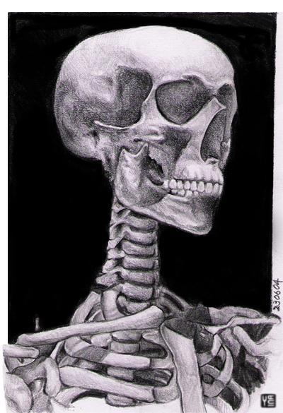 Drawn sleleton head bone By head skeleton shuqing skeleton