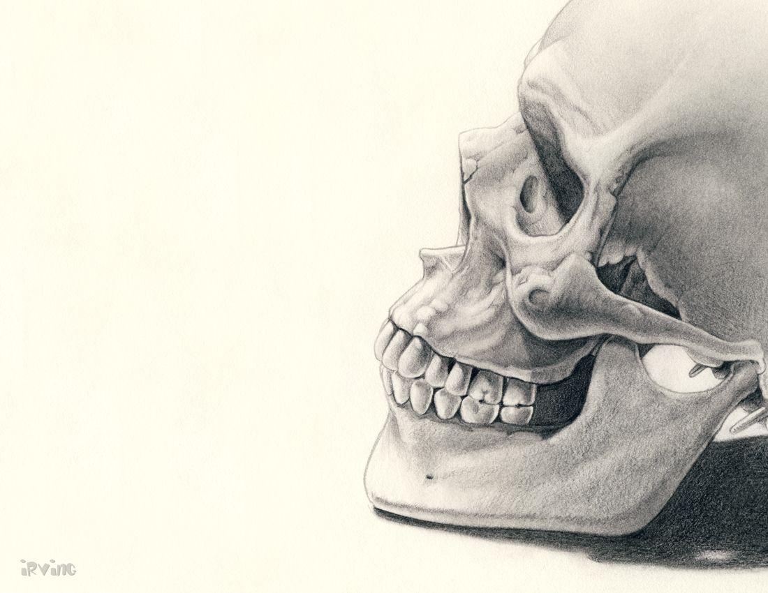 Drawn sleleton head bone Skeleton bone abstract Head skeleton