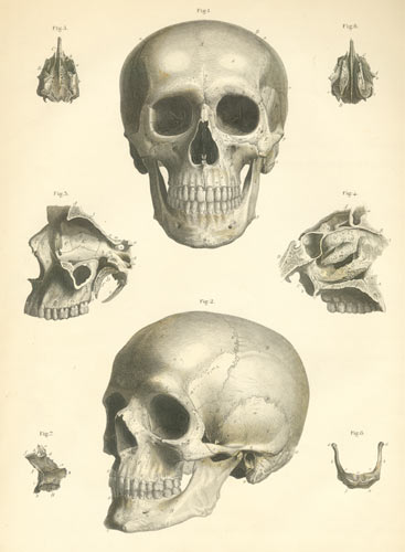 Drawn ssckull anatomy 50 Skull to a How