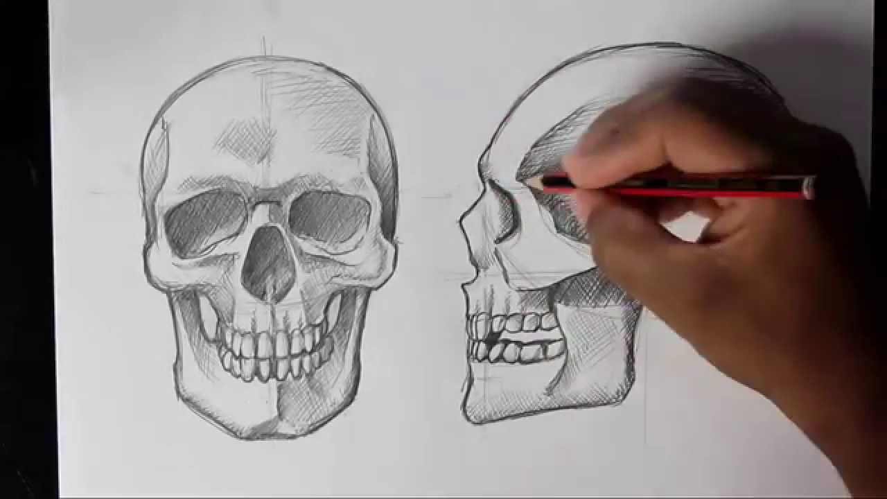 Drawn profile really Draw Front/Profile Draw Human Skull