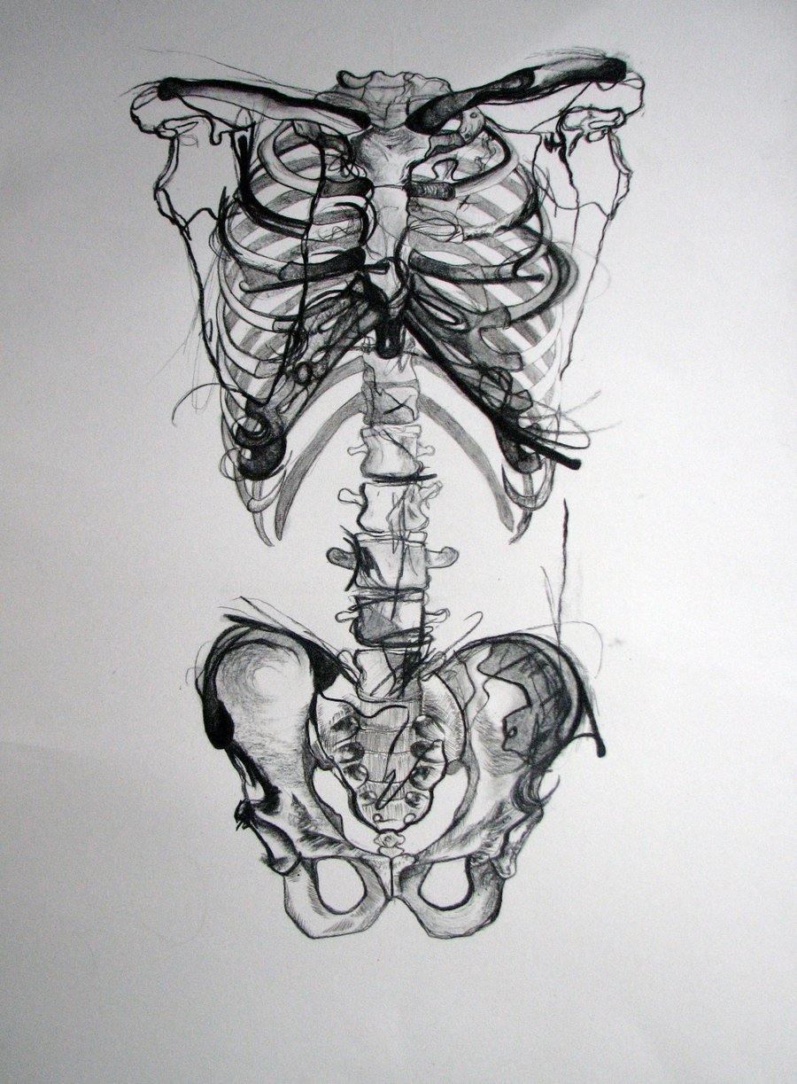 Drawn skeleton human form art Picslist Pay attention com drawing