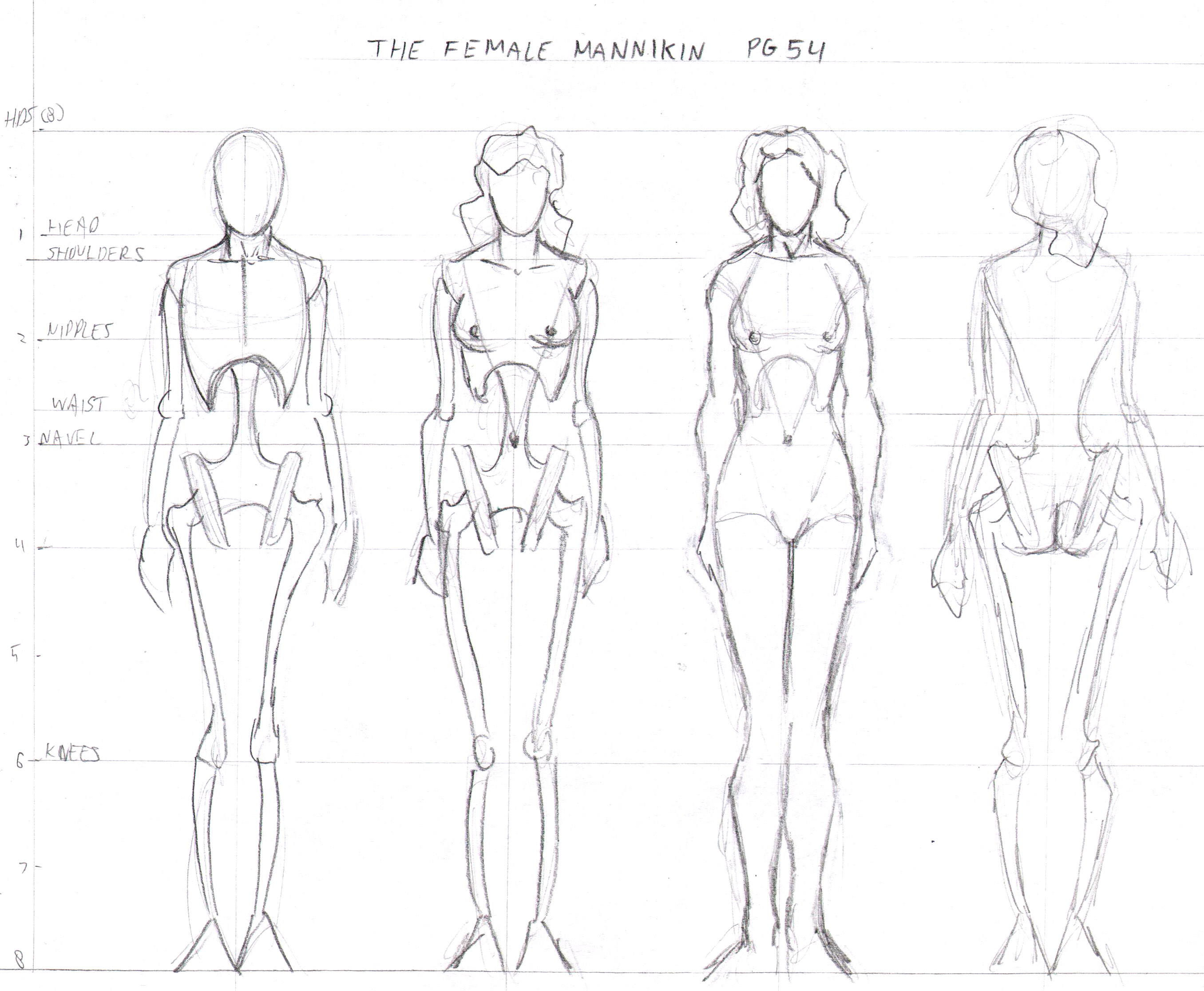 Drawn skeleton female skeleton Personal student course/the Measuring the