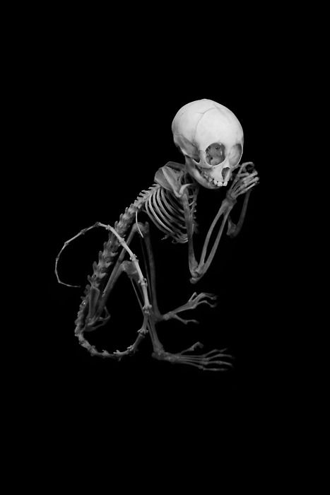 Drawn skeleton monkey Behance things  Monkey Matthew