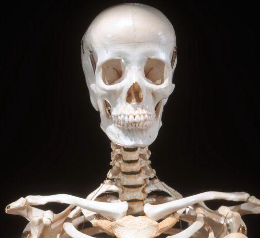 Drawn sleleton neck On Head Skeletons 21 Drawing