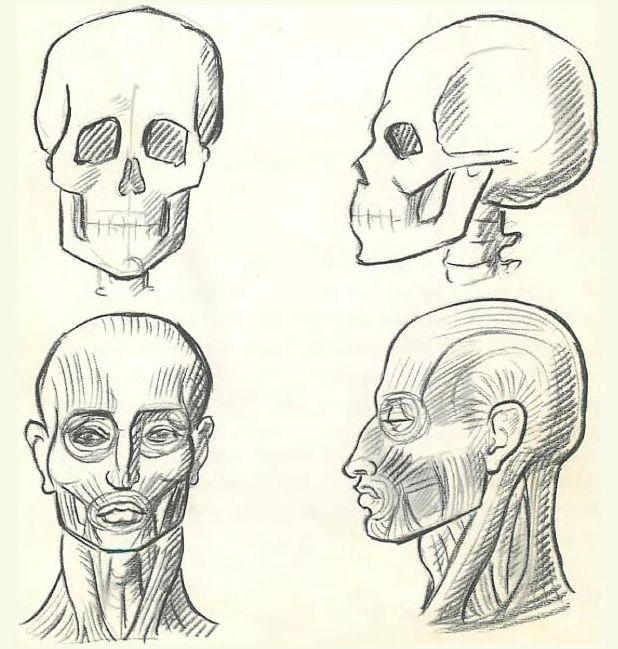 Drawn sleleton neck Neck Skeleton and images help!