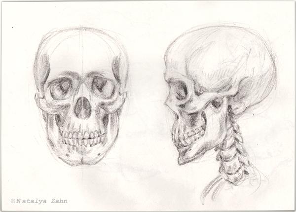 Drawn sleleton neck Nature skull toed (heart) illustration