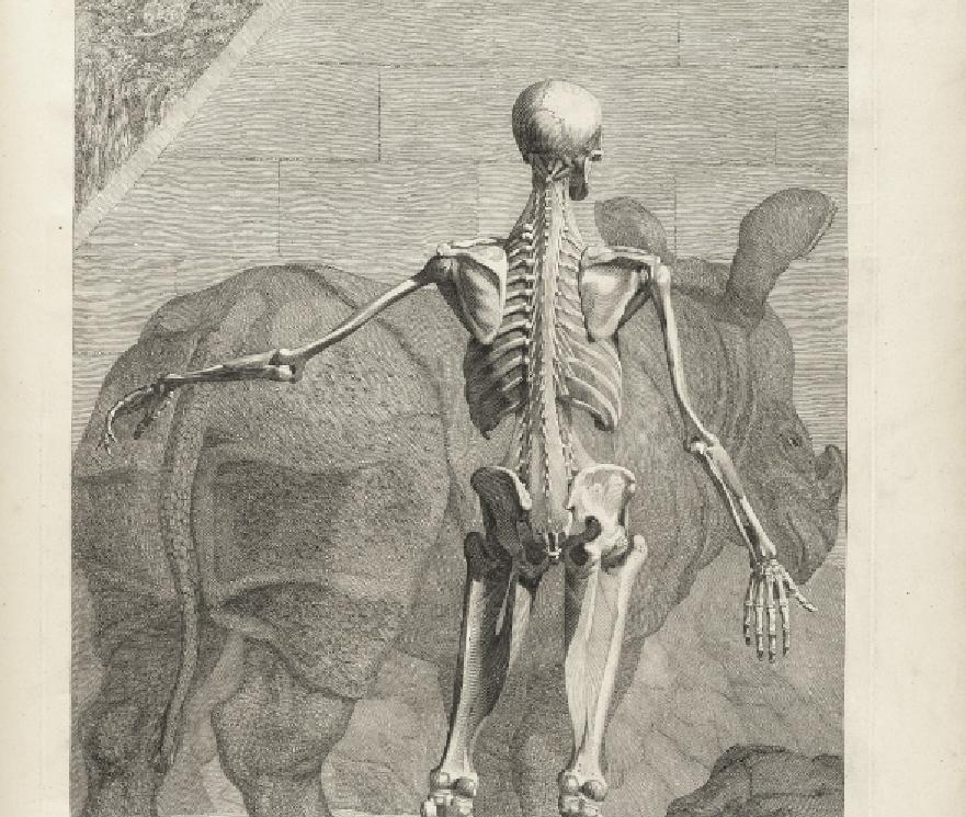 Drawn skeleton old Historical Anatomy Science Neurodope Hand