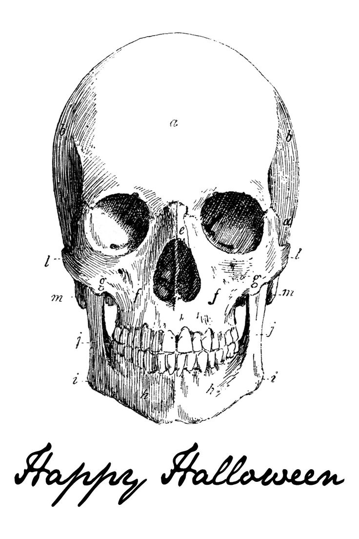 Drawn sleleton printable halloween Best Halloween BONES 245 images