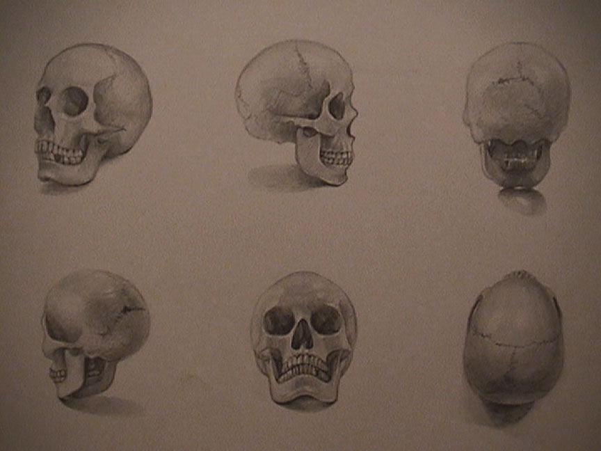 Drawn skeleton real Young in Drawing Skull Ha