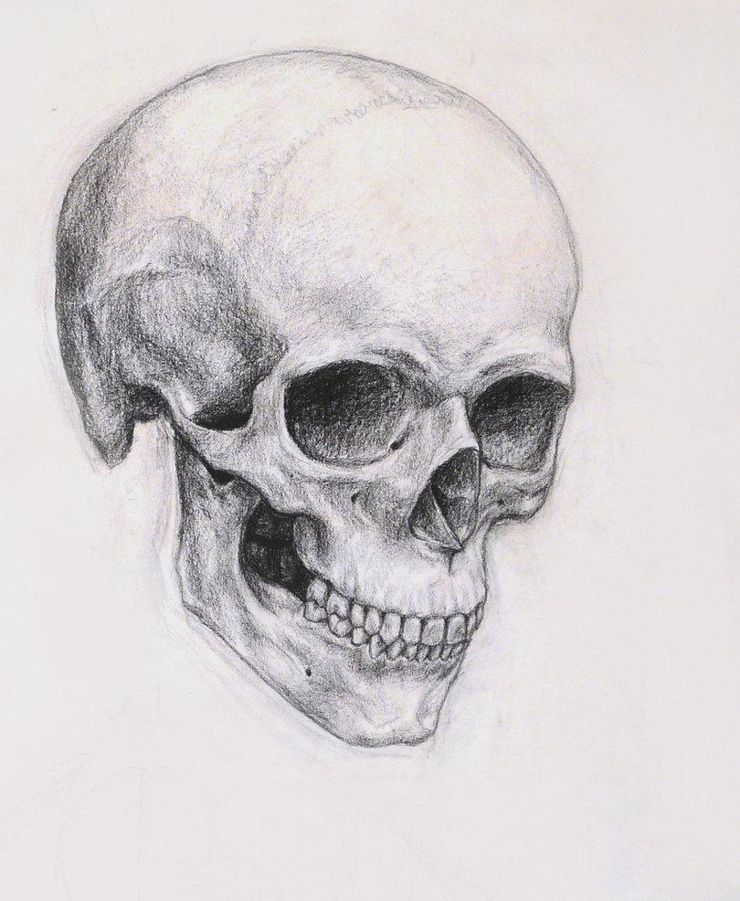 Drawn skeleton realistic ~Nachiii Skull deviantART on Skull