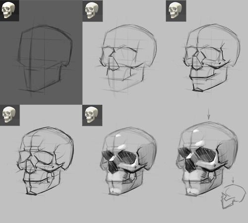 Drawn skeleton reference 25+ Skull ideas Reference The
