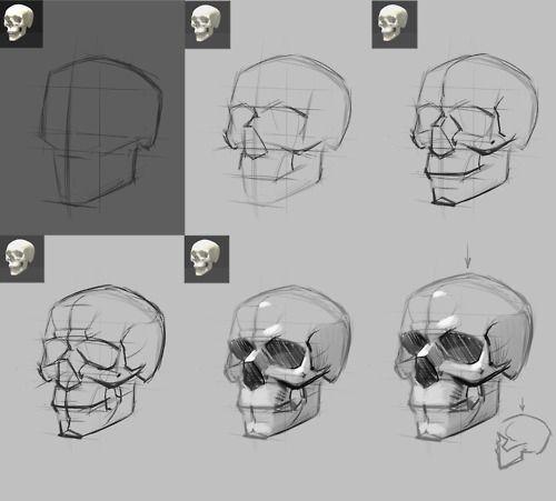 Drawn skeleton reference 25+ Skull The best Skull