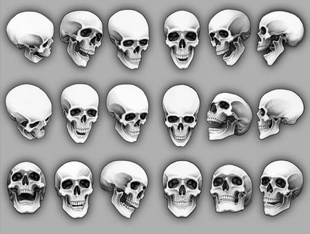Drawn skeleton reference Markquestion: Drawing Skull Emotions heads